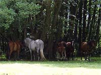 Ponys at The New Forrest