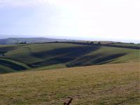 South Dorset Downs: nichts mit down - alles ziemlich hügelig!